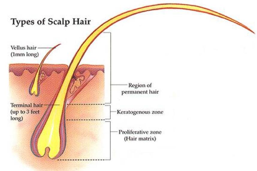 types of scalp hair